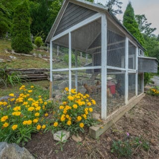 Chicken coop for younger chickens - The Cove at Fairview Vacation Rentals - Asheville NC