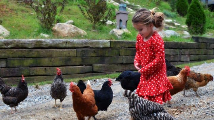 blog-young-girl-with-chickens-at-the-cove